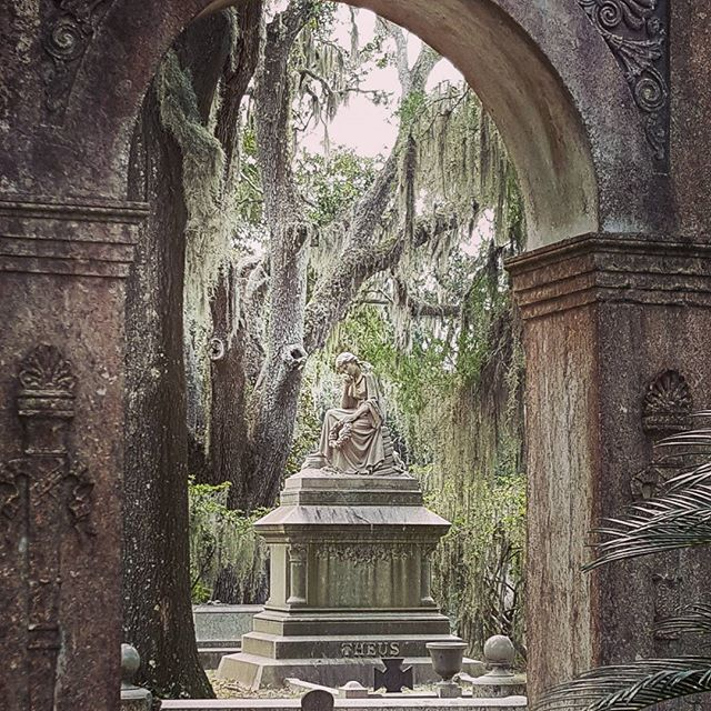 There is something eerily beautiful about an old cemetery.  Bonaventure cemetery in Savannah Georgia.  The feeling of peacefulness fills my soul as I walk though the sacred grounds. www.botaniquevitalis.com #organic #herbs #witchesofinstagram #witches #herbalism #holistic #healing #kitchenwitch #healersofinstagram #vitality #homemade #plants #garden #lotion #cream #yourhealth #mindbodyspirit #essentialoils #wisewoman #botanicals #botaniquevitalis
