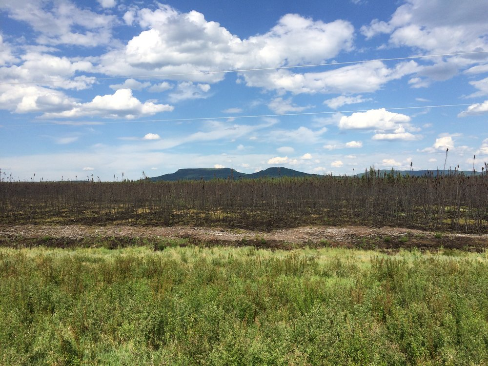 Remnants of a recent forest fire.