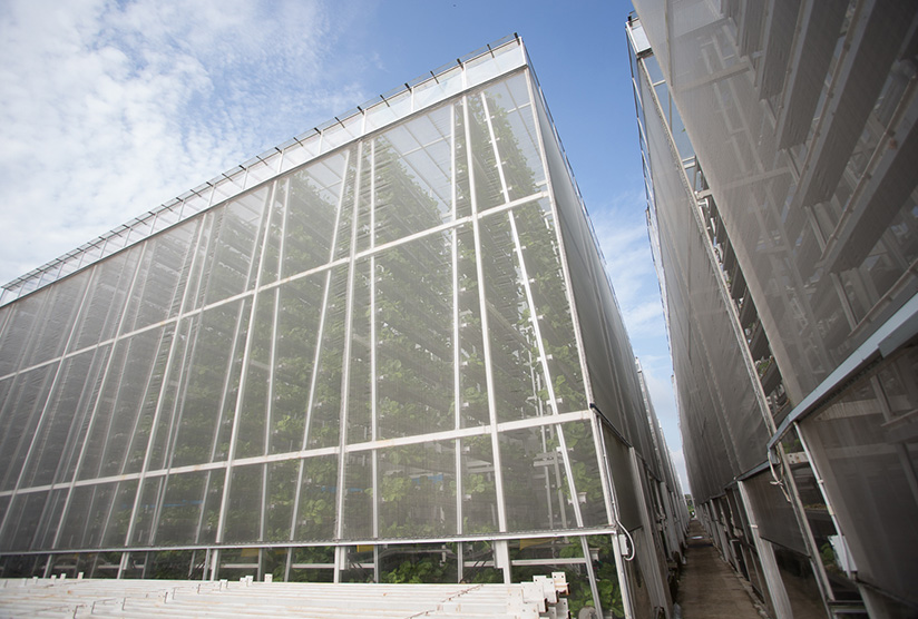 Sky Greens vertical greenhouse in Singapore (photo courtesy of www.futurereadysingapore.com