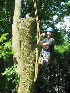 Shadywood Tree Experts - certified arborist