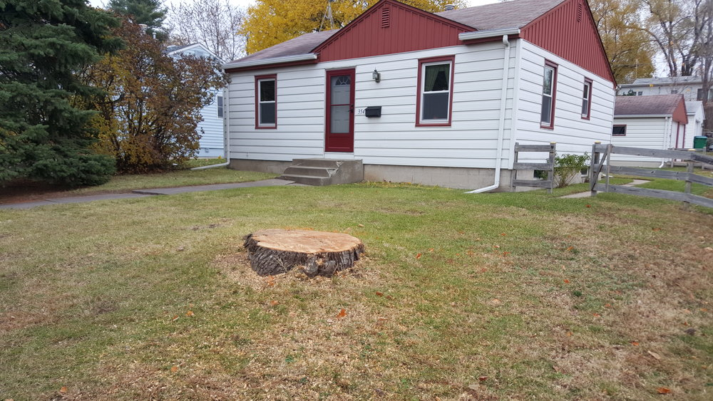 Shadywood Tree Experts stump grinding