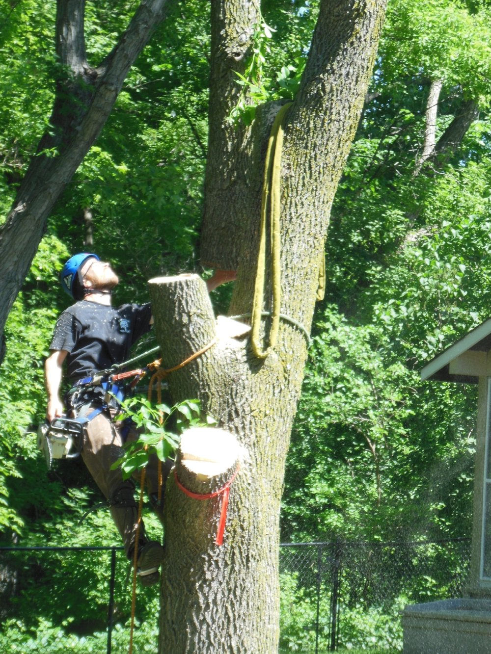 Shadywood Tree Experts - tree removal