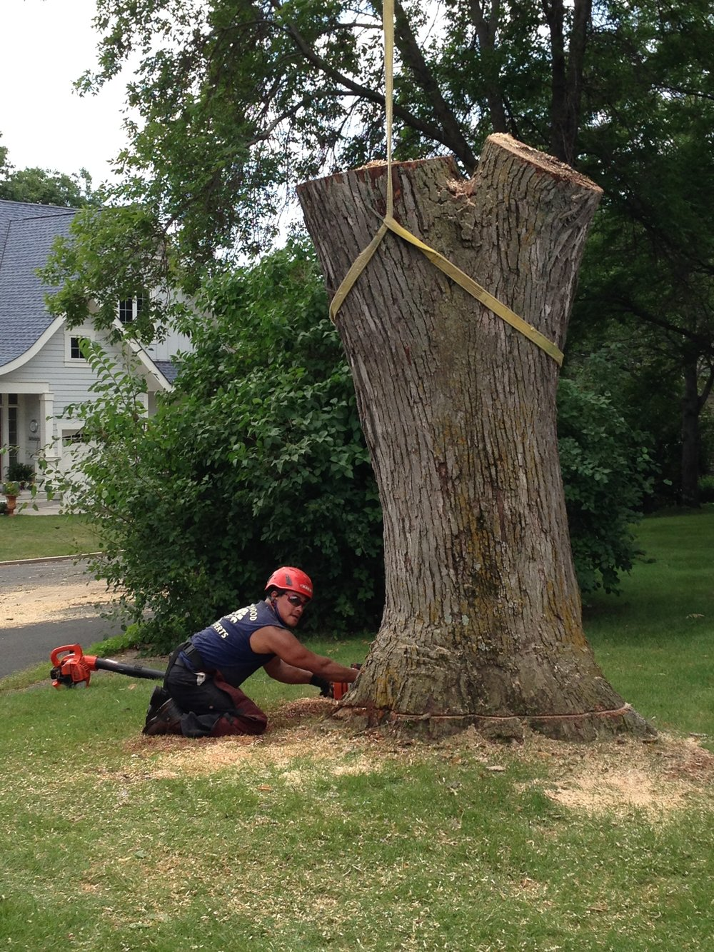 Shadywood Tree Experts - tree removal