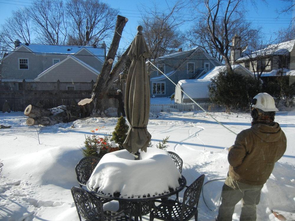 Tree Removal Feb. 2014 064.JPG