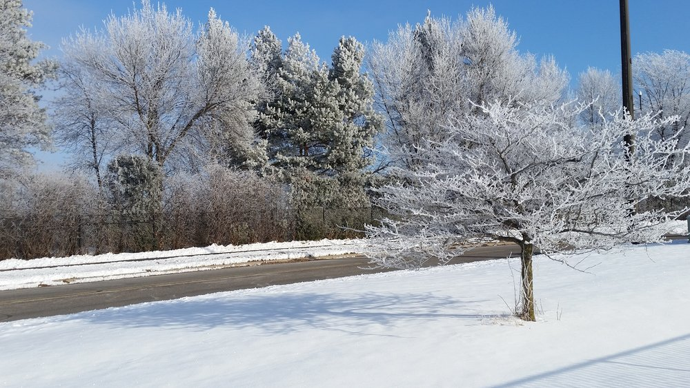 Snowy tree 1 by Steve Sather - Shadywood Tree Experts.jpg