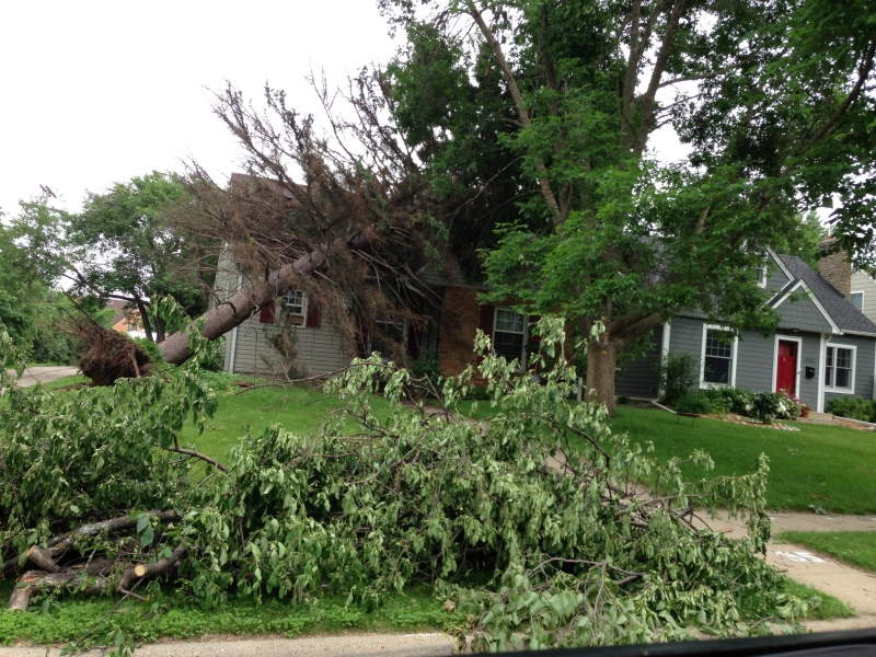 Evergreen tree tipped over on house.JPG