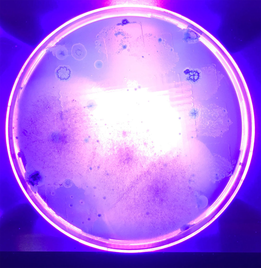Nurhan Gokturk,  Air is not free , 3.5 x 3.5 x .5 Inches, Nutrient agar, carbon with UV lamp, 2018