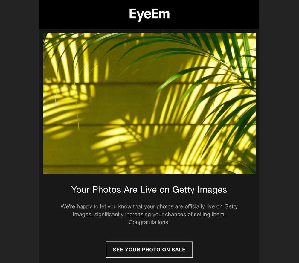 EyEM_YourPhotosLifeOnGettyImagres_Close-UpOfPalmLeaves.jpg