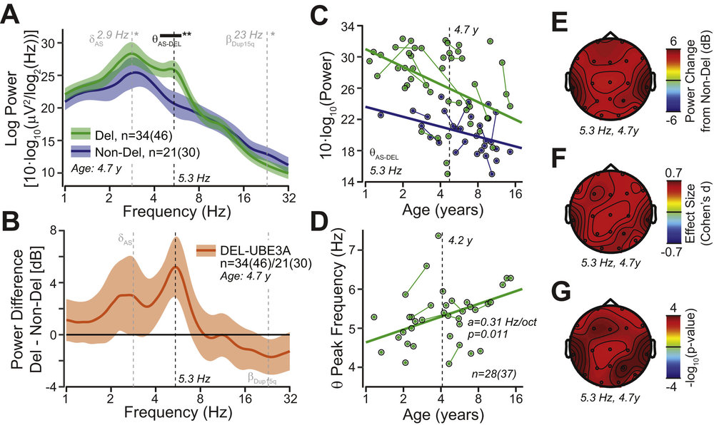 Figure 5, Frohlich et al., 2019 . Spectral power differs between  Angelman syndrome  (AS)  genotypes .  (A)  Grand average power  spectral density  derived from the linear mixed model with age set to the mean log2 age of 4.7 years (average across all visits and electrodes). Deletion AS (Del) is shown in green, nondeletion AS (Non-Del) is shown in blue. The colored bands show 95% confidence intervals. The black bar indicates frequency ranges with significant group differences (corrected for multiple testing across frequencies). The gray lines indicate the specific hypotheses tested in the delta and beta bands (see  Figures 3  and  4 ).  (B)  Difference in spectral power between deletion AS and nondeletion AS. The colored bands show 95% confidence intervals.  (C)  Developmental trajectory of theta power (5.3 Hz) derived from the linear mixed model (average across all electrodes). Longitudinal visits are connected by solid lines.  (D)  Correlation between theta peak frequency and age. Longitudinal visits are connected by solid lines.  (E–G)  Scalp topography of power change in decibels,  effect size  (Cohen's  d ), and  p  values for  t  tests between deletion AS and nondeletion AS derived from the linear mixed model for 5.3 Hz and the mean log2 age of 4.7 years.