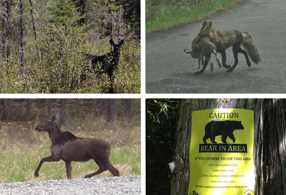 Wildlife-Collage2.jpg