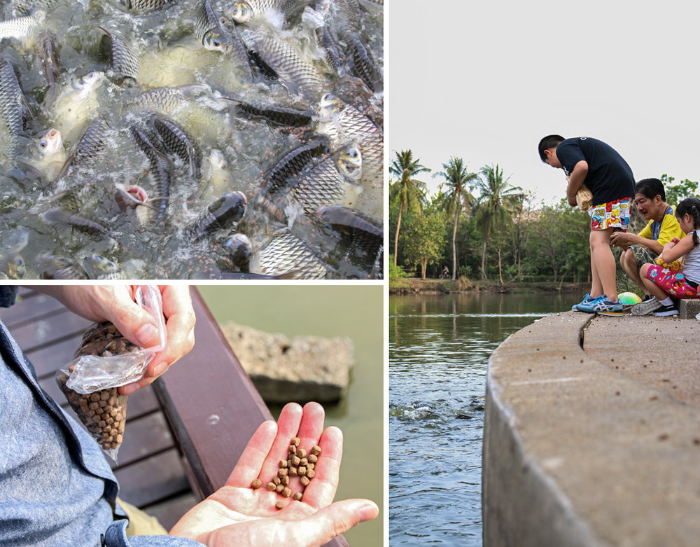 Tri-Collage-Fish-Pond.jpg