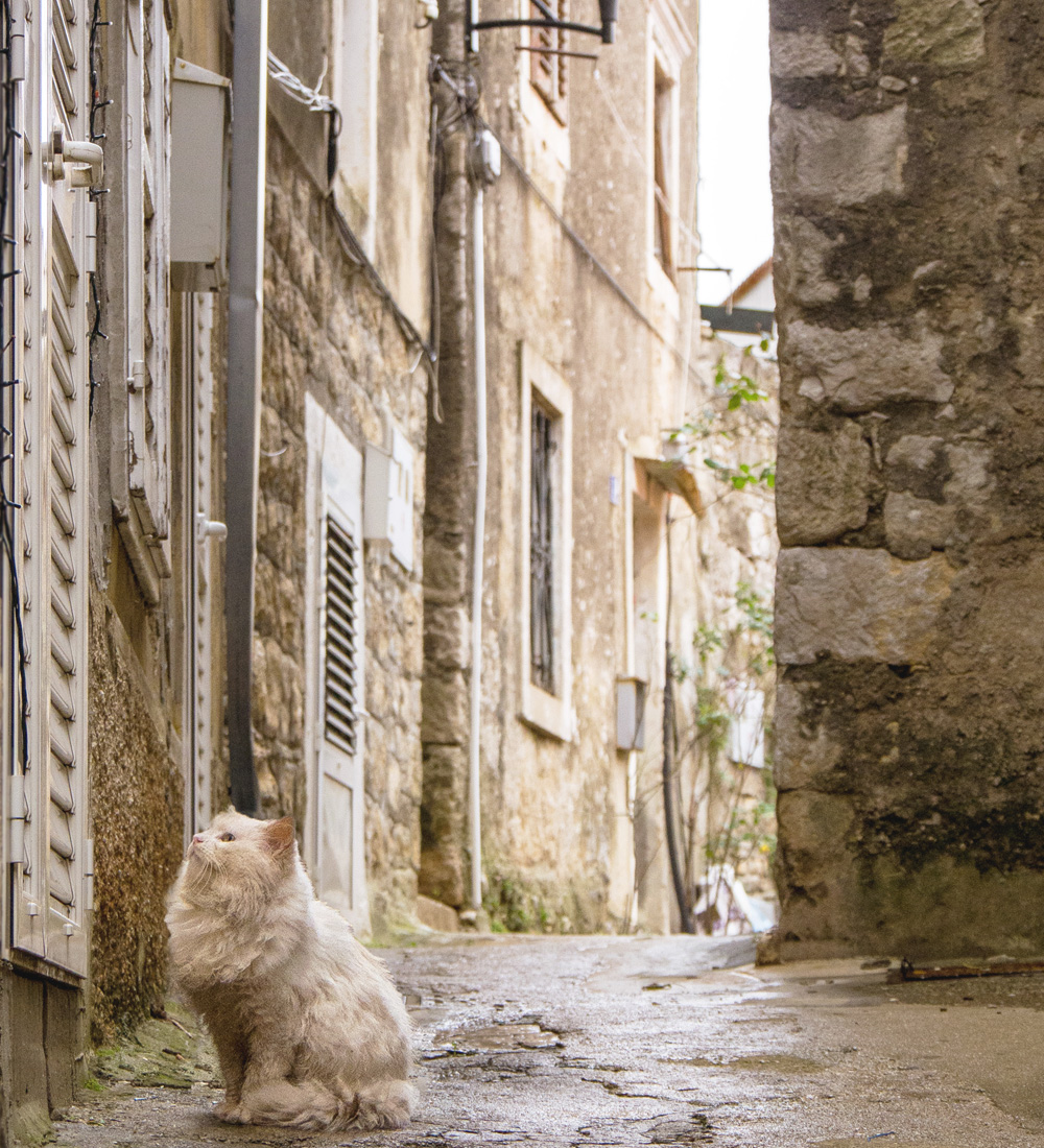 Croatian Cat in Alley