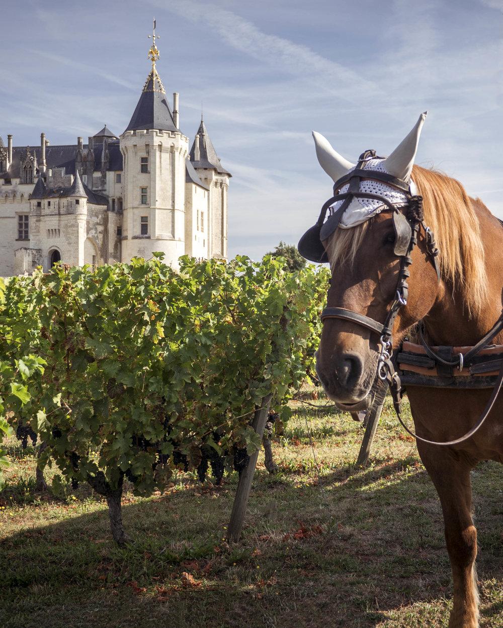 Chateau de Saumur, Loire Valley France