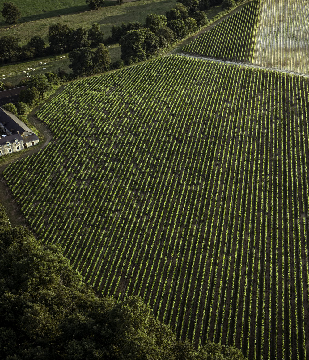 Loire Valley France Vineyards