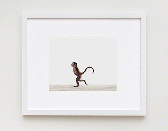 baby-monkey-2-the-animal-print-shop-3.jpg