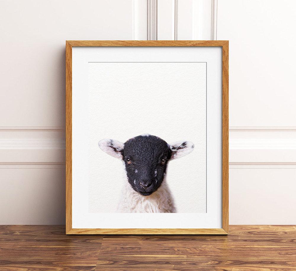 baby sheep lamb nursery print