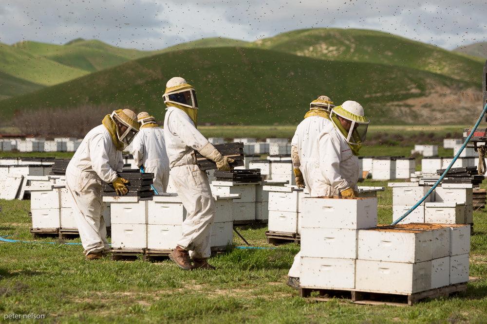 BeekeepersAdee_GI7A1343.jpg