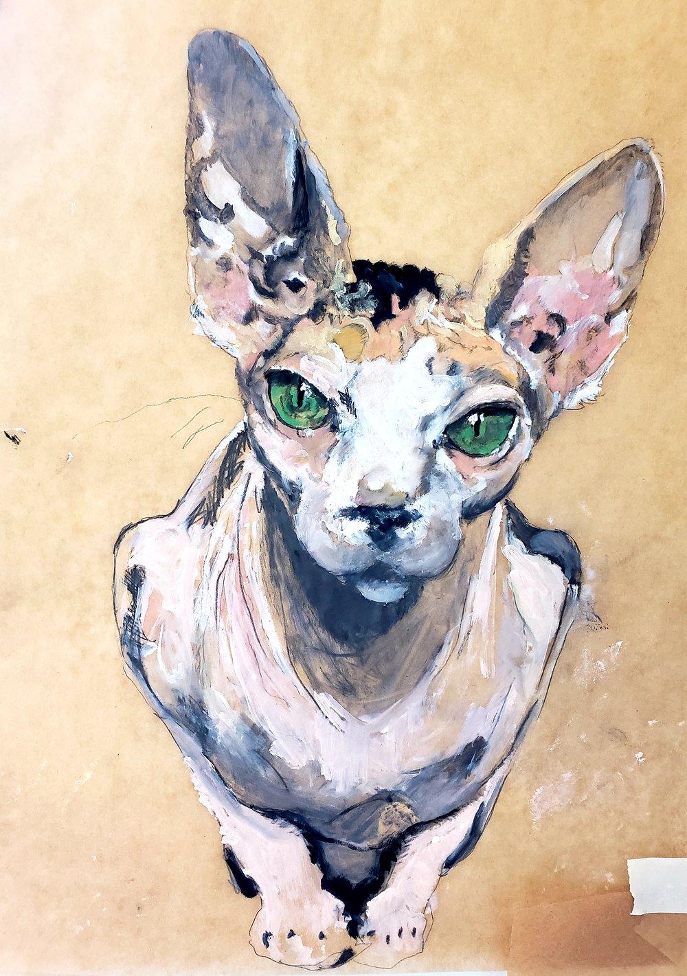 Big Eyed Bald Cat, 2018