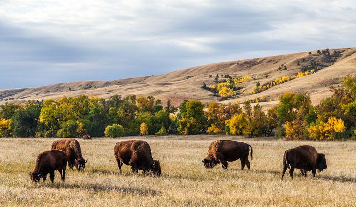 custer-state-park.jpg