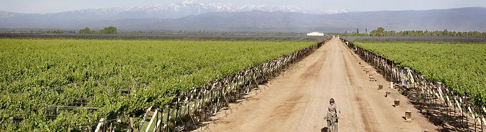 Uco Valley i Argentina