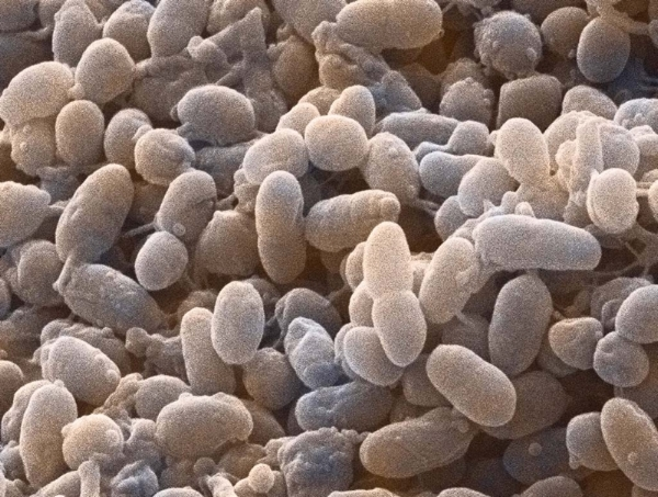 Bacteria and minerality