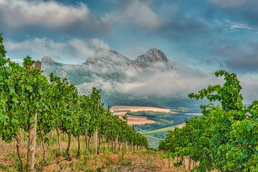 Kanonkop_Vineyard-Mountain-1.jpg