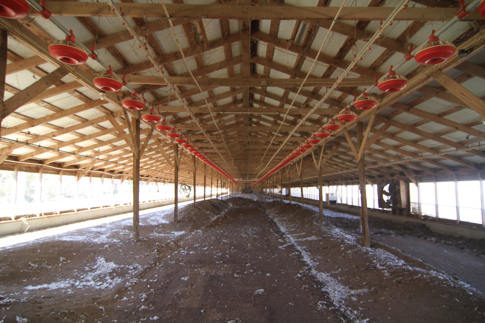 The North Wind and the Sun , Silk Hope Chicken Houses (Empty), photograph, 2013