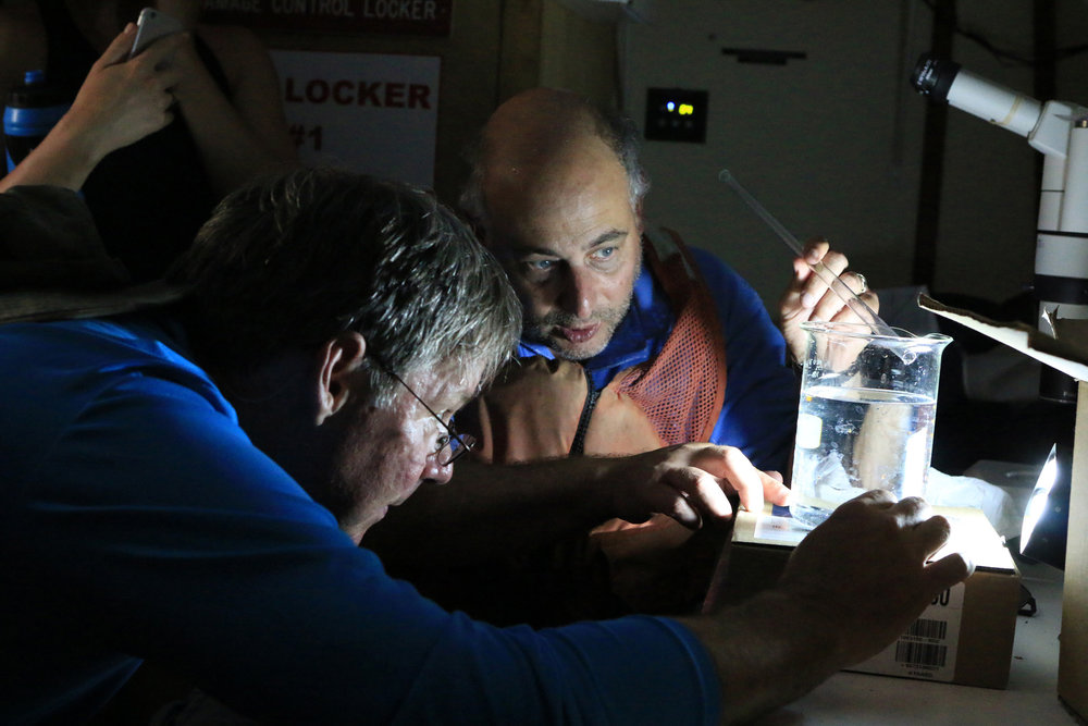 Skidaway Institute of Oceanography biologist Marc Frischer, right, and Marietta science teacher Westby Slade look at a beaker full of plankton to decide which organism they will examine under a microscope aboard the Research Vessel Savannah's wet lab on June 17, 2016. The plankton came from a water sample collected at Gray's Reef National Marine Sanctuary off the Georgia Coast during the penultimate day of the 2016 Rivers to Reef program, which puts grade-school science teachers up close and personal with the scientific process on a weeklong trip from Atlanta to the coast.  (Dash Coleman/Savannah Morning News)