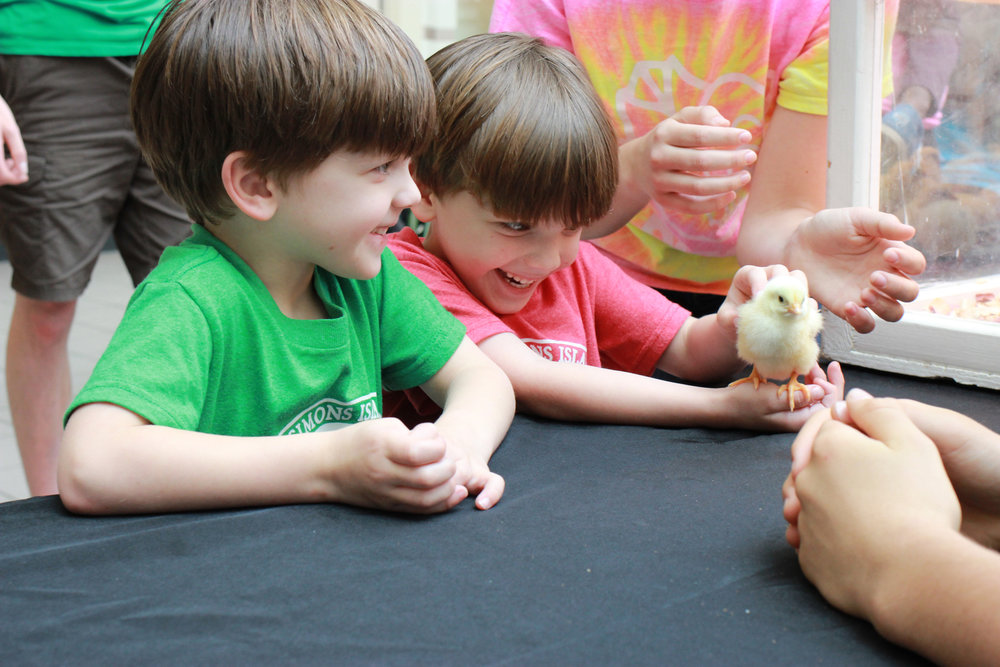 Excited kids meet a baby chicken in April 2015 during a pre-Easter event at Savannah's Oglethorpe Mall that was sponsored by the University of Georgia.  (Dash Coleman/Savannah Morning News)