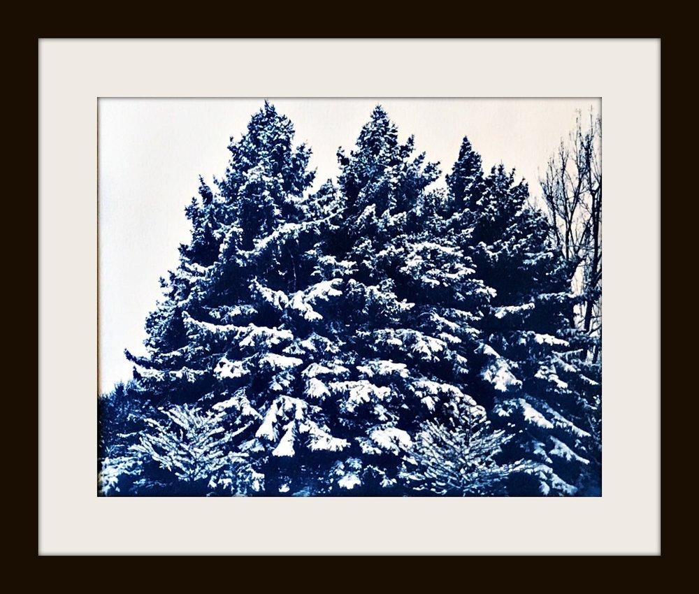 snowyFolsomtreesFRAMED.jpg