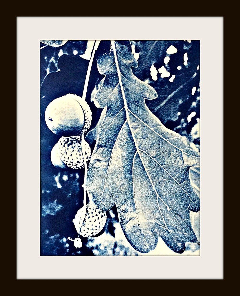 acornwebFinal.jpg