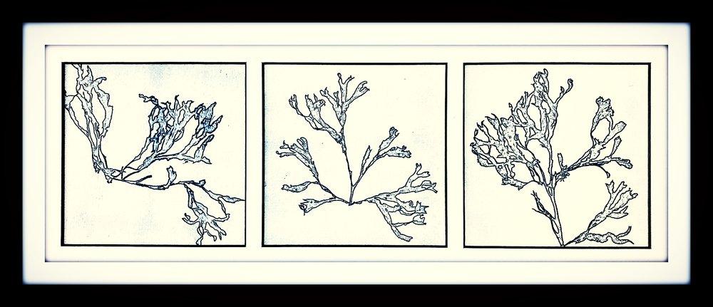 seaweed3WEB.jpg