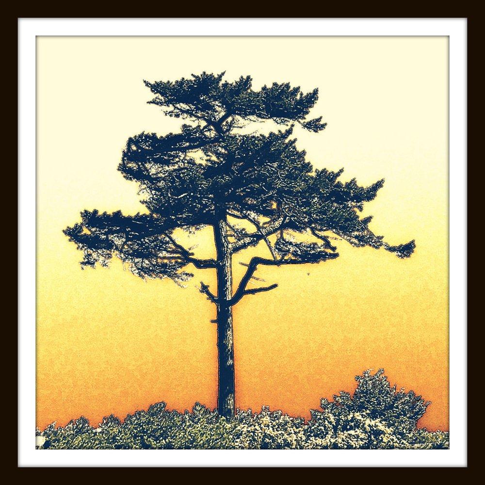 FtwordentreePHOTO.jpg