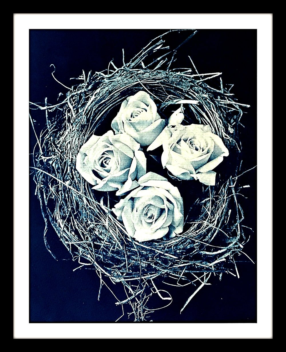 birdsnestrosesWEB.jpg