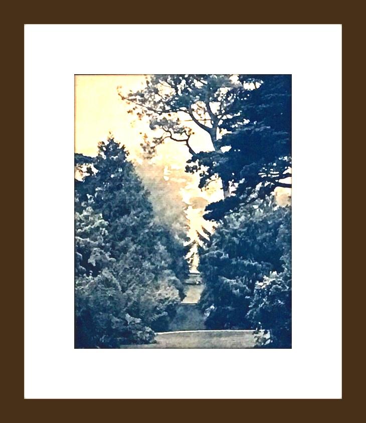 foggygreenwichwoodsFRAMED.jpg