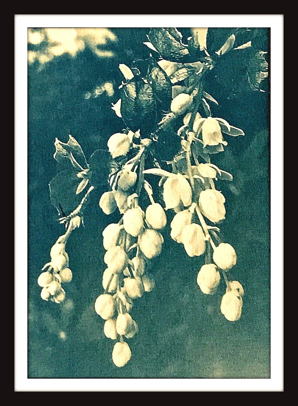 goldenberrieswebFinal.jpg