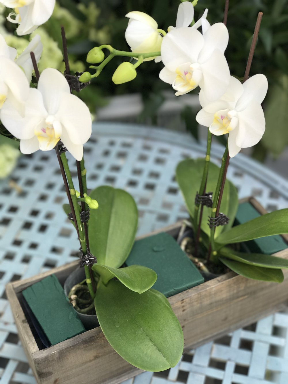 Place the water soaked floral foam between the potted orchids