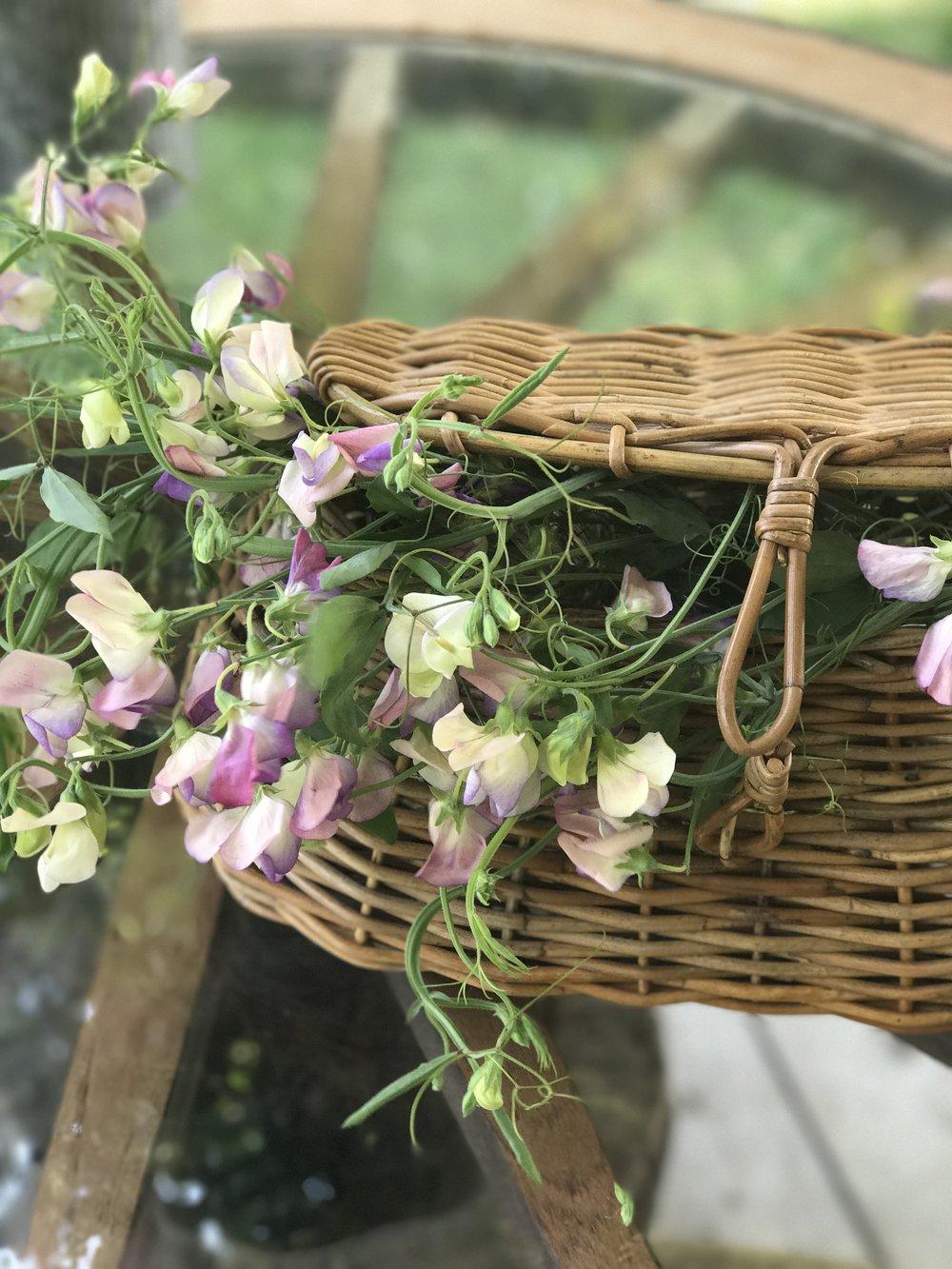 Sweet Peas in a Basket