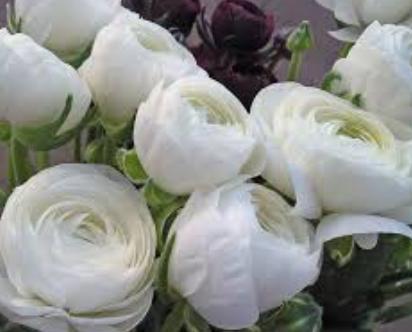 White-Ranunculus.png
