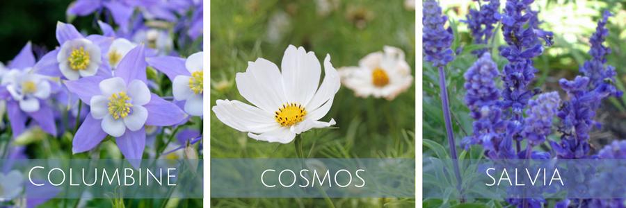 Best-English-Garden-Plants