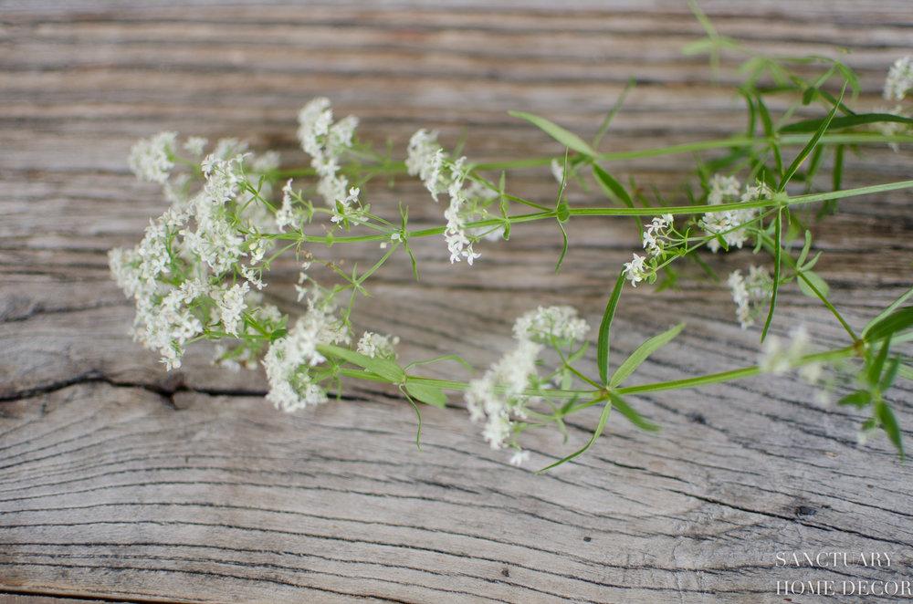 Wildflower Picking-7.jpg