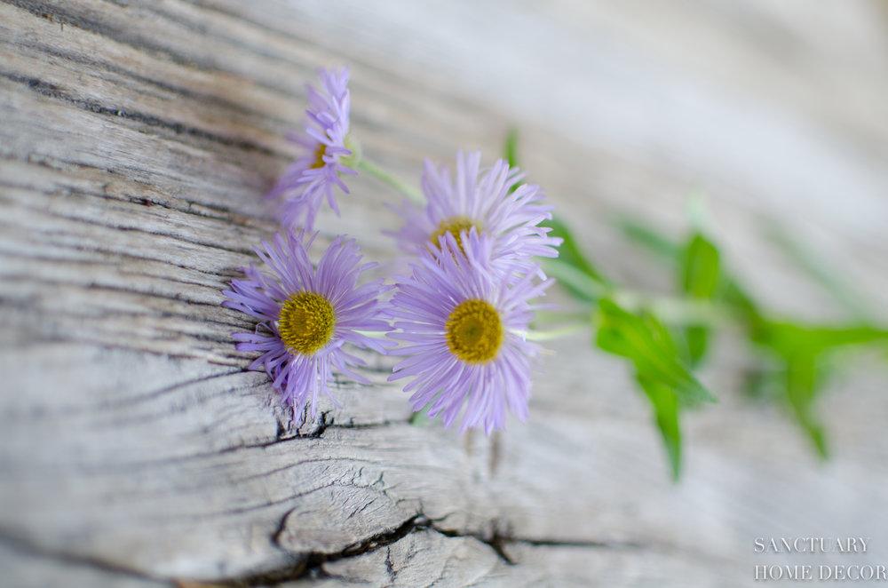 Wildflower Picking-11.jpg
