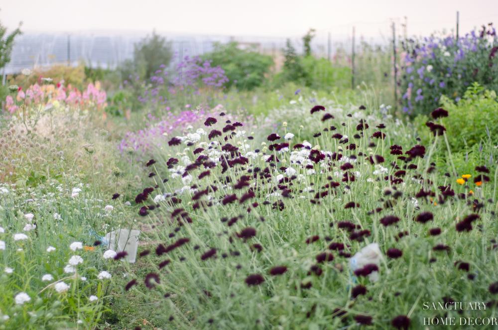 Montana Flower Farm-21.jpg