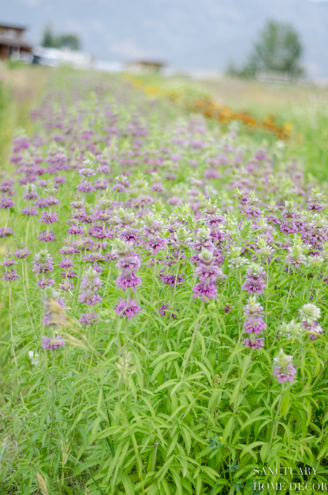 Montana Flower Farm-8.jpg