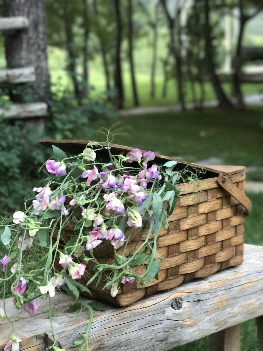 Sweetpeas-in-a picnic-basket.jpg