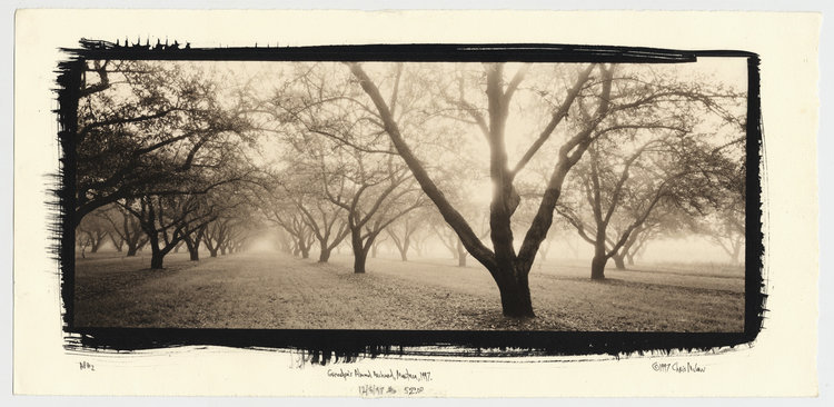 "Grandpa's Almond Orchard, Manteca, CA 1997.  7""x17"" platinum/palladium direct contact print, edition of 25  Collection of the George Eastman House International Museum of Film and Photography"