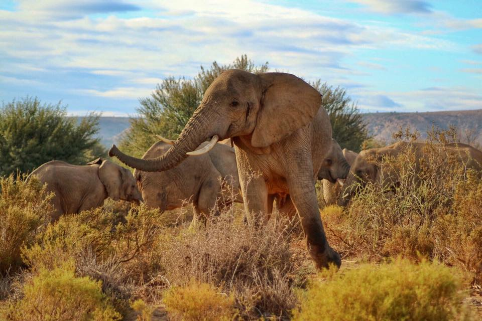 sanborna-safari-elephant-legit-trips.jpg