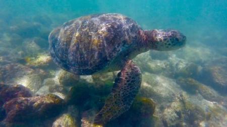 galapagos-turtles-scuba-legit-trips.jpg