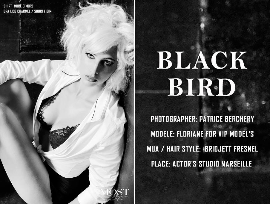 BLACK BIRD_1.jpg