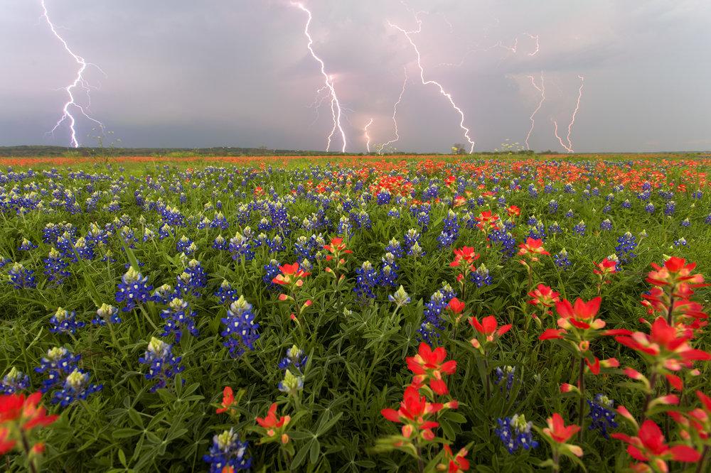 Electric Spring.jpg